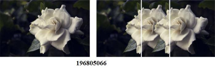 196805066