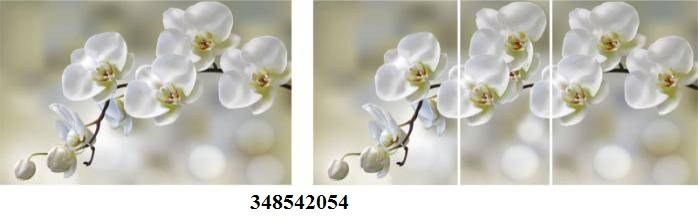 348542054