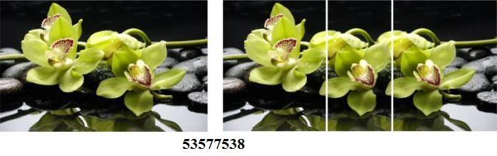 53577538