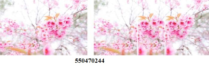 550470244