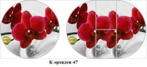 К-орхидеи-47