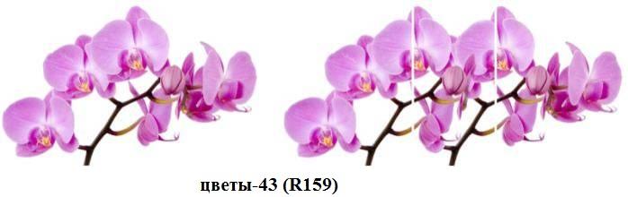 цветы-43 (R159)
